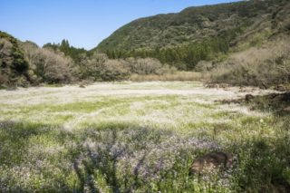 【前人未踏の秘境?!】「五蔵池に咲く、幻のハマダイコンを徹底追跡!」~場所はココ