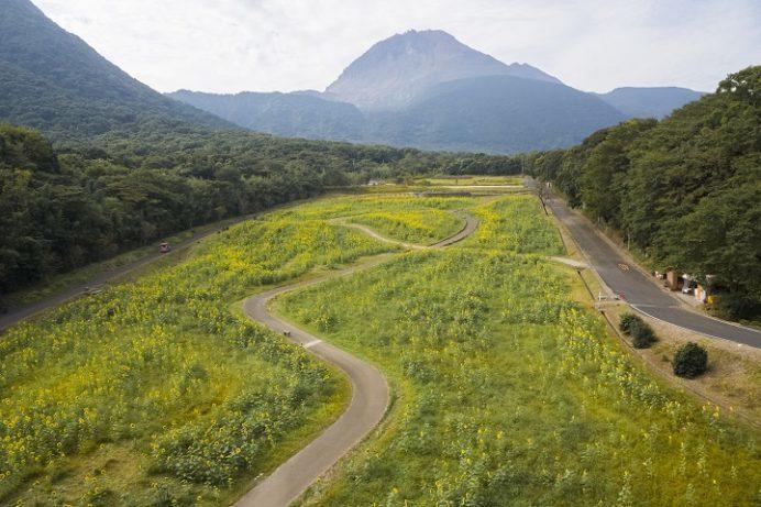 しまばら火張山花公園(長崎県島原市上折橋町)のひまわり(ヒマワリ)