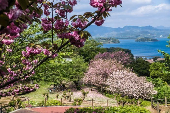 西海橋公園(佐世保市針尾東町)の桜と花見、八重桜