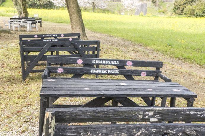 しまばら火張山花公園(長崎県島原市上折橋町)の葉の花と桜