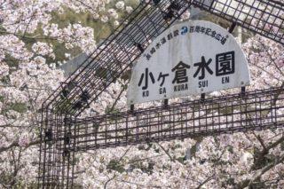 【満開日いつ?2021年開花速報】「小ヶ倉ダムの桜」(長崎市上戸町)~花見の穴場SPOT!