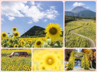 【2021見頃速報!】「長崎県のヒマワリ畑」~悔しいほど美しい、名所7スポット