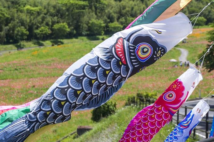 しまばら火張山花公園(長崎県島原市上折橋町)の鯉のぼり(こいのぼり)