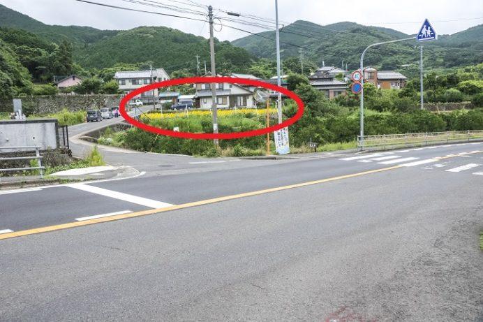 諫早市多良見町 大草小学校そばのヒマワリ(ひまわり)