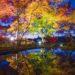 【11月20日開園!今が見頃】〈三十路苑の紅葉〉~ライトアップは必見